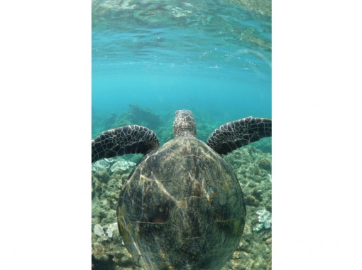 【鹿児島・屋久島】ウミガメと一緒に体験ダイビング(半日コース)<ライセンス不要>の紹介画像