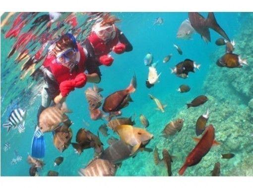 【沖縄・青の洞窟】可愛いお魚と青の洞窟シュノーケル!写真無制限&餌付け付や星の砂もプレゼント