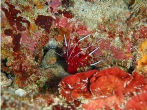 ダイビングサービス ティーダ(Diving Service TEEDA)の画像
