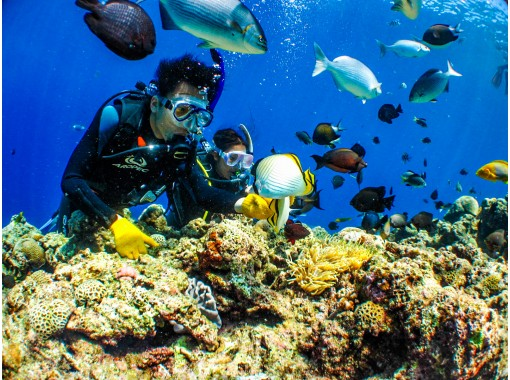 Local coupon support [Blue Cave] Experience diving! Unlimited photos & star sand gifts, feeding experience included, and a separate set with marine is also recommended!の紹介画像