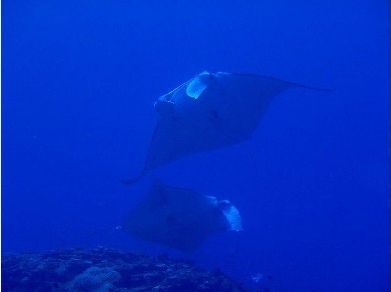 【石垣島 カメ マンタ ダイビング】ファンダイビング 1ダイブ(朝から参加)の紹介画像