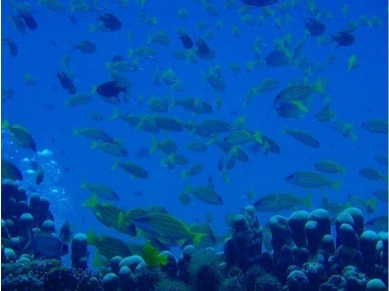 【石垣島】オープン・ウォーター・ダイバーコース【ライセンス】の紹介画像