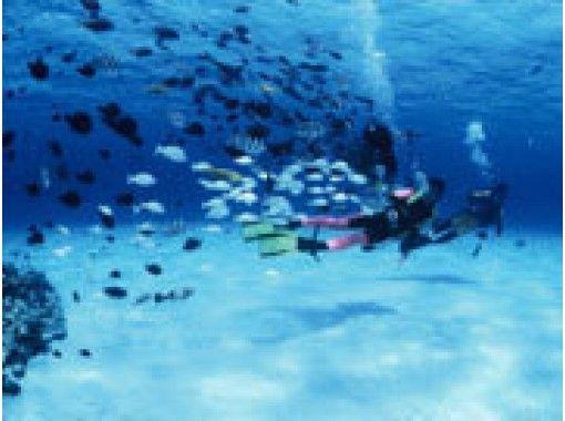 """【나하 발】 라마 해역 (찌비시 제도 포함) 반나절 편리하고 충실한 팬 다이브! """"미세 산성 전해수 도입 업체""""깨끗한 장비 관리로 안심 · 안전한 바다 놀이를! !の紹介画像"""