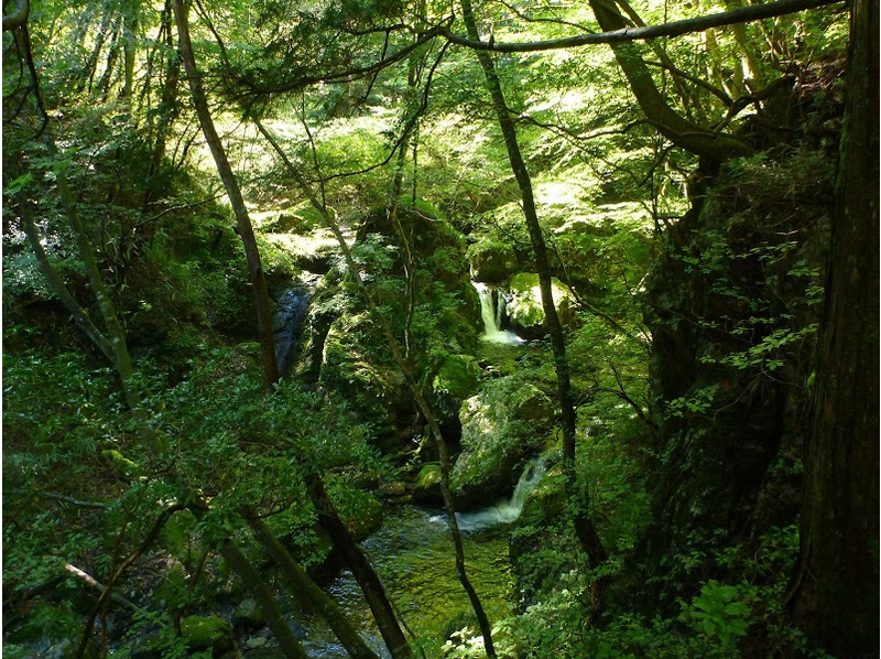 【Tokyo · Okutama】 Introduction image of Canyoning experience (Mononoke course)