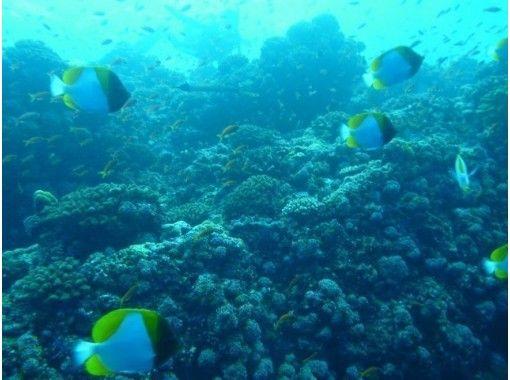 【沖縄 砂辺 真栄田岬】沖縄の海で気軽に1ダイブ ファンダイビング 【1ビーチ】