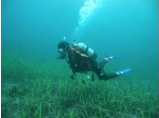 [Iwate-Sanriku] student discount Open Water Diver Course (diving license)の紹介画像