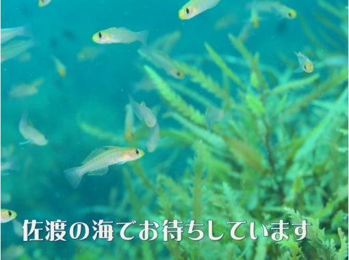【佐渡・初心者向け!】体験ダイビング(3時間コース)