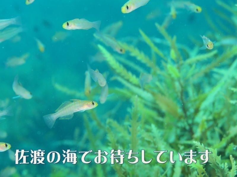【佐渡・初心者向け!】体験ダイビング(3時間コース)の紹介画像