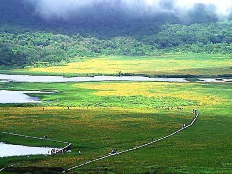 【福島・裏磐梯・雄国沼湿原】日本一の生息株数の絶景!ニッコウキスゲと雄国沼湿原散策の紹介画像