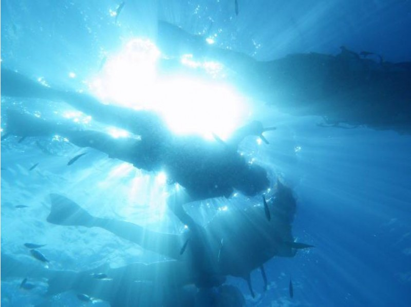 【沖縄・国頭】綺麗な海で楽しくダイビングのライセンスを取得しよう!【OW】の紹介画像