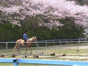 KRC乗馬センター(KRC Riding Center)の画像