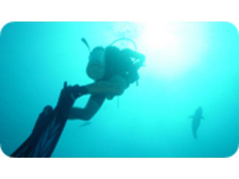 【京都 上京区】未経験者・初心者向け ライセンス不要 海で1日体験ダイビングの紹介画像