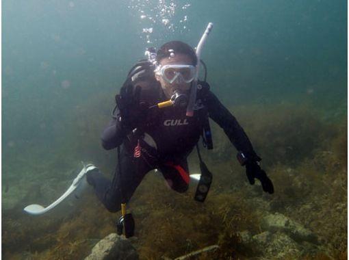 【富山県・2時間】魅力的な青い海の世界へ!ゆったり体験ダイビング!