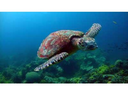 【富山県・3日間】海の世界へようこそ!伏木・越前3日間オープンウォーターダイバーコース