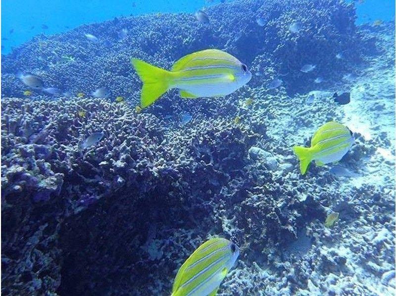 【沖縄・恩納村】青の洞窟&熱帯魚セットコースの紹介画像