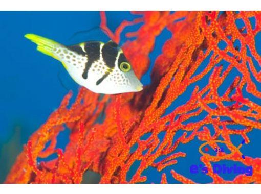 【沖縄・久米島】久米島の美しい海でファンダイビングを満喫!