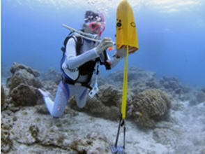 Diving School SEA PLANET(シープラネット)の画像