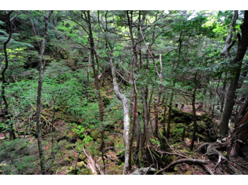 [Fuji-Aokigahara Jukai! ] Primeval forest down trekking tour of the introduction image