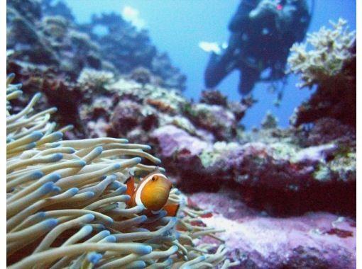 [Okinawa Kume Island] Hospitality diving fans diving - Kume Island ~の紹介画像