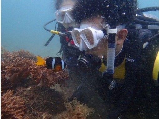 【四国・徳島】未経験・初心者も安心☆ 熱帯魚に会える!ウキウキ体験ダイビング(ビーチダイブ)