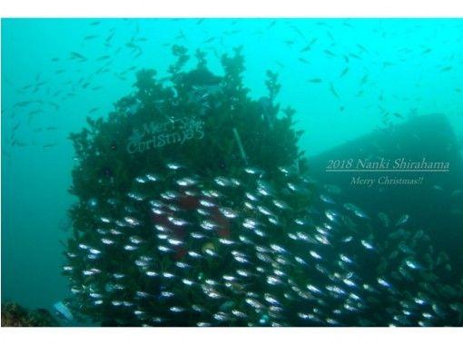 [Wakayama / Shirahama] campaign price! Beginner & blank diver support plan (2 Botodaibu & rental included)の紹介画像