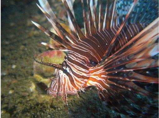 【四国・徳島】熱帯魚の楽園ぽっこり小島で体験ダイビング