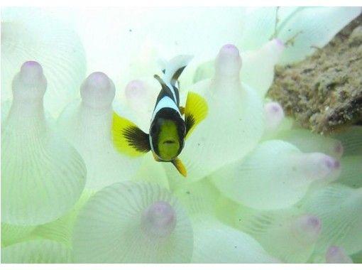 【四国・徳島】Cカード取得者限定!美しい海を堪能ファンビーチダイビング 1~2ダイブ