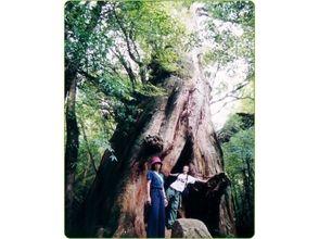 屋久島ネイチャー企画 フィールド(FIELD)の画像