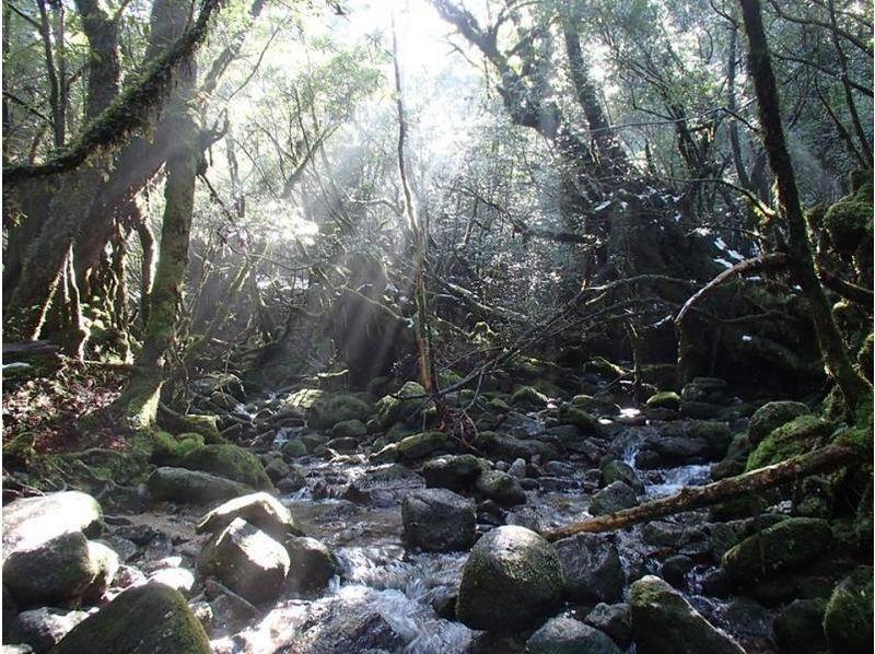 【2名様以上!1日・ヤクスギランドツアー】自然が豊富なヤクスギランドへ!紀元杉にも立寄る広大ツアー!の紹介画像