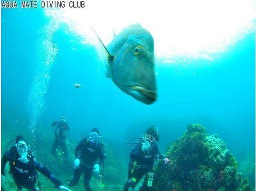 【東京・神津島でダイビング】ビーチからエントリーするファンダイブで手軽に1ダイブ