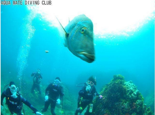 【東京・神津島でダイビング】2ダイブで伊豆諸島の海を満喫!ビーチからエントリーするファンダイブ