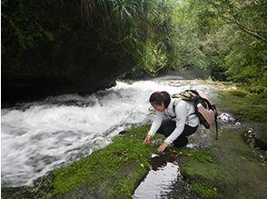 西表島ジャングルホテル パイヌマヤ(Jungle Hotel Painumaya)の画像