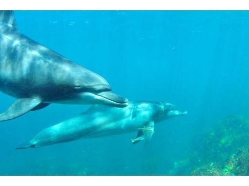 【東京・神津島でダイビング】神津島の海へボートエントリーで1ファンダイブ