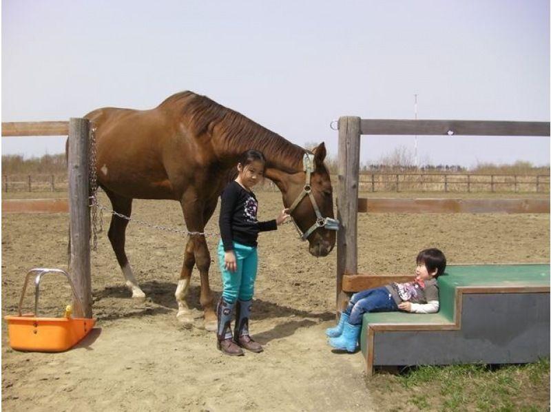 【北海道・南幌】引き綱乗馬コースの紹介画像