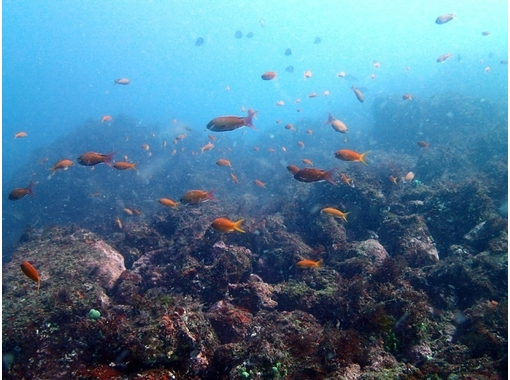 【Experience Diving(Hatsushima)] To the big sky named the sea! ! Experience Diving courseの紹介画像