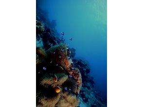 DiveService BlueGate(ダイブサービスブルーゲイト)の画像