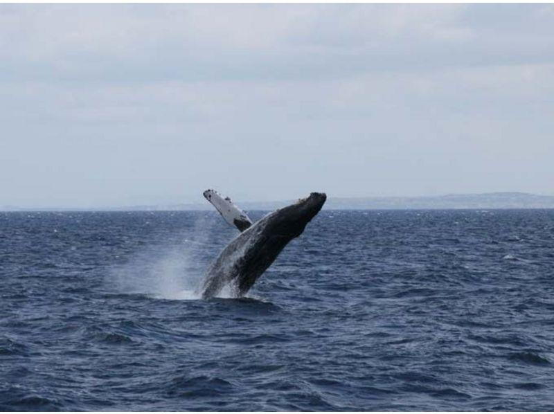 【沖縄・慶良間諸島】貸し切りボートで気楽にホエールウォッチング【3時間】の紹介画像