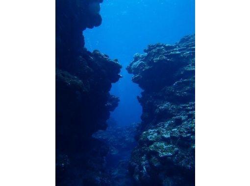 【東京】海中世界を堪能しよう!体験ダイビング(海洋)