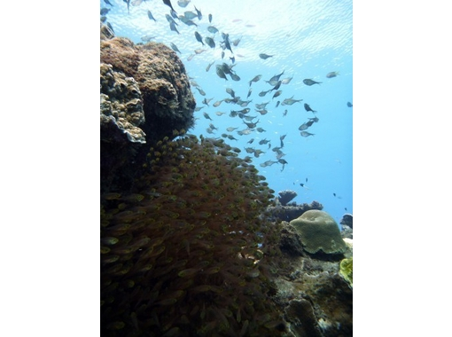 [Tokyo] trying to enjoy the underwater world! Discover Scuba Diving (ocean)の紹介画像