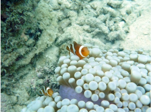[Tokyo] who want to enjoy a longer diving Recommended! Diving introductory courses (licensed)の紹介画像