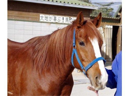 【兵庫 明石・東播磨】乗馬体験!会員レッスンコース