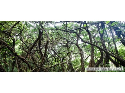 [Tokyo Ogasawara] Jungle trekking on the Ogasawara island-a simple plan of half-day course with guidance by guide!の紹介画像
