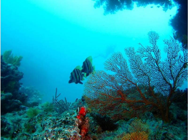 [Kanagawa Miura · OPENWATER level or higher] introduction image of fan dive course (one night dive)