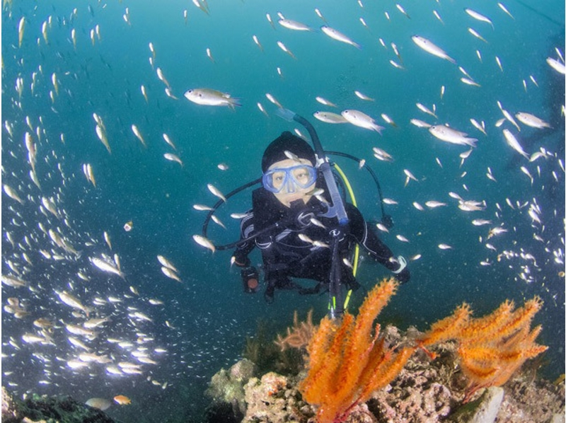 [Kanagawa, Miura easy Snow cable ring! ] Ocean Academ course Snorkeler of introduction image