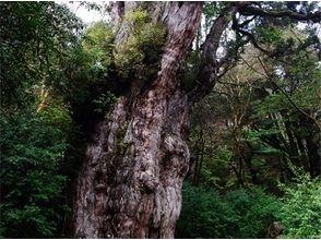 屋久島ガイド21EC-K(Yakushima guide 21EC-K)の画像