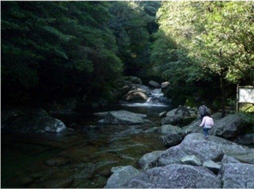 【鹿児島・屋久島】白谷雲水峡Aコース