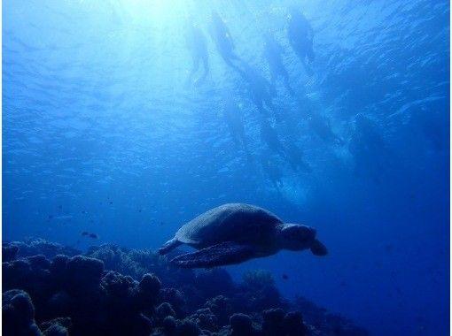 [Okinawa ・ Minnajima Island] Day return swimming and boat snorkeling Diving or Parasailing(Plan A)の紹介画像
