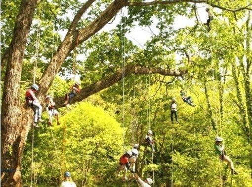 【兵庫・但馬】最高15m!ロープを使って木の上に登ってみよう!ツリーイング(半日コース)