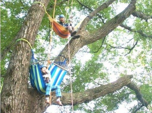 地域クーポン対応!【兵庫・但馬】最高15m!ロープを使って木の上に登ってみよう!ツリーイング(半日コース)
