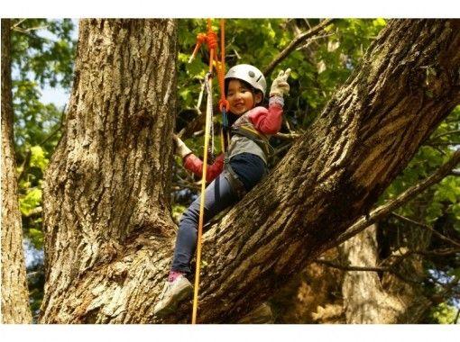 地域クーポン対応!【兵庫・但馬】最高15m!ロープを使って木の上に登ってみよう!ツリーイング(半日コース)の紹介画像